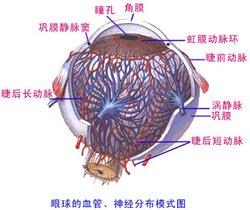 眼底视网膜动脉硬化的认知及防治